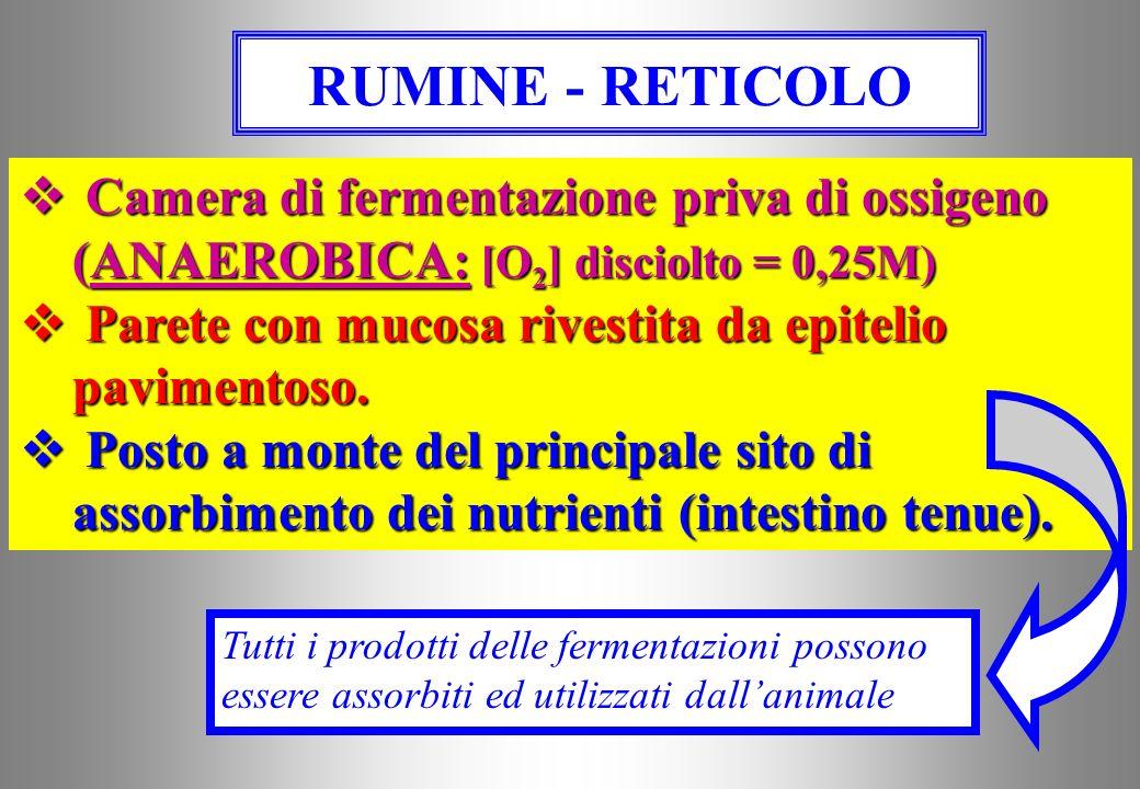 RUMINE - RETICOLO Camera di fermentazione priva di ossigeno (ANAEROBICA: [O2] disciolto = 0,25M)